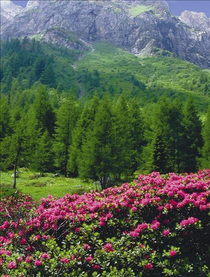 Proloco Paularo - Natura e territorio